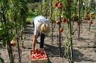 Coop Care เปิดตลาดให้เกษตรกรรับมือปัญหาเศรษฐกิจ