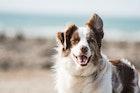 ชีวิตน้องหมาก็สำคัญมาทำประกันสัตว์เลี้ยงกันดีมั้ย?